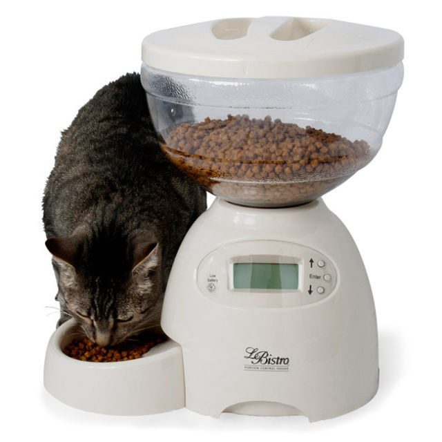 and cats automatic that hunting requires builds to dinner feeder hunt man for cat