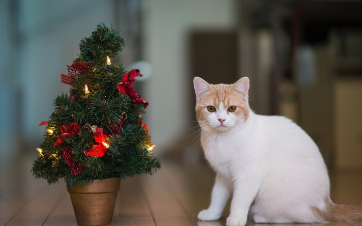 cats-christmas-cat-tree