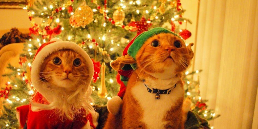 christmas-gift-for-cat