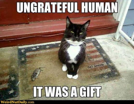 cat bring dead animal