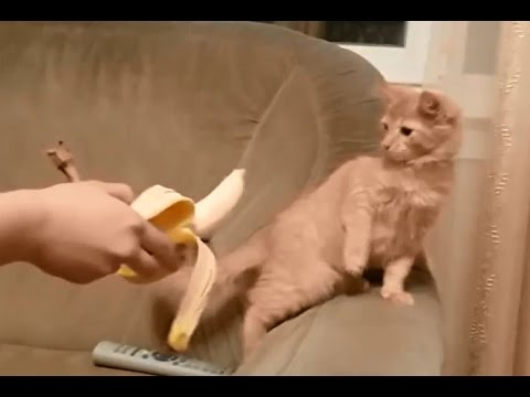 Cats don't like seeing bananas