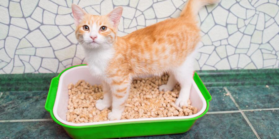 Benefits Of Clumping Cat Litter