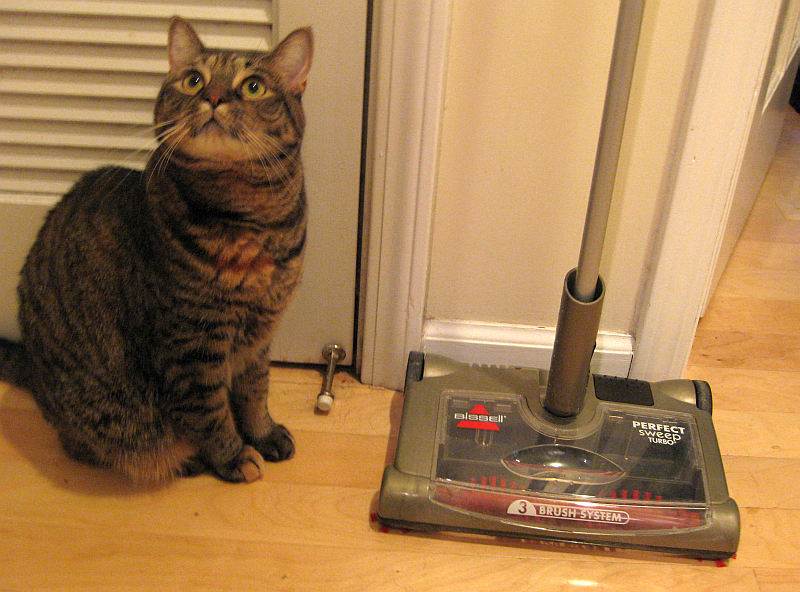 Best Stick Vacuum For Cat Litter Reviews In 2020 Obeymycat