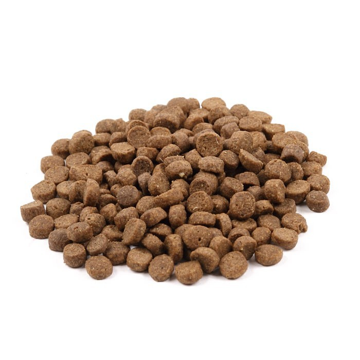 choosing best dry cat food