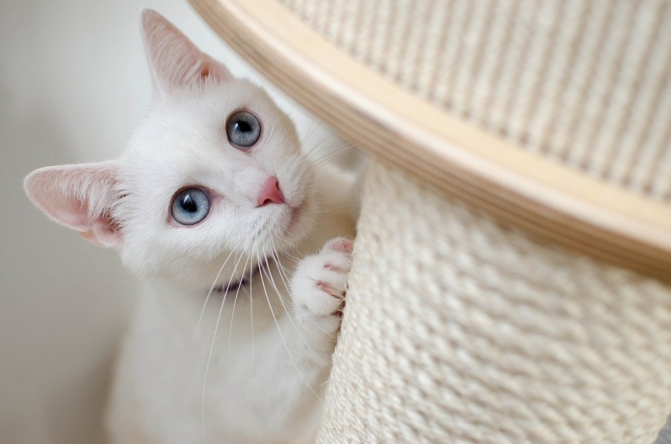 How to remove odor from new cat tree