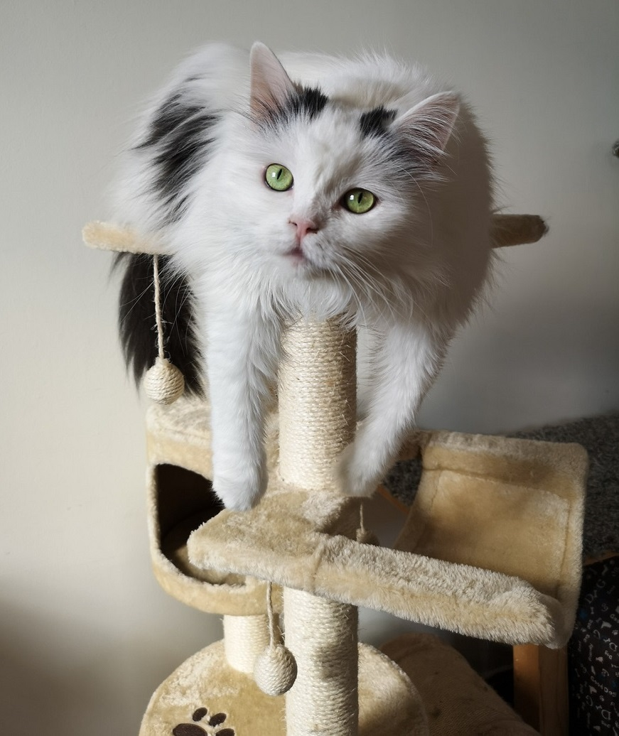 how to make a cat tree