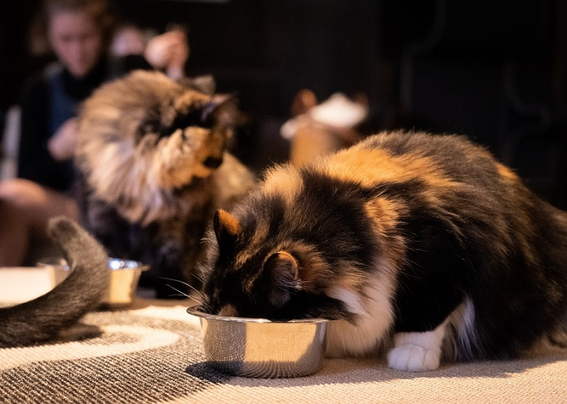 is dog food bad for cats