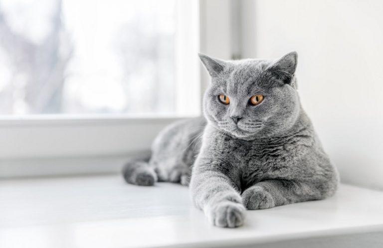 litter asthma cats