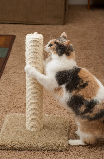 cat scratching post small or big