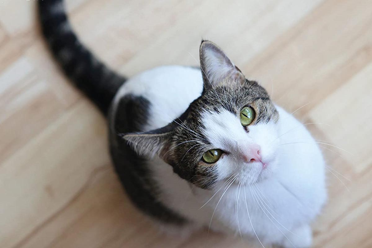 What to Consider Before Purchasing a Treat For Your Cat